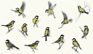 Gifts and Greeting Cards for Bird Watchers