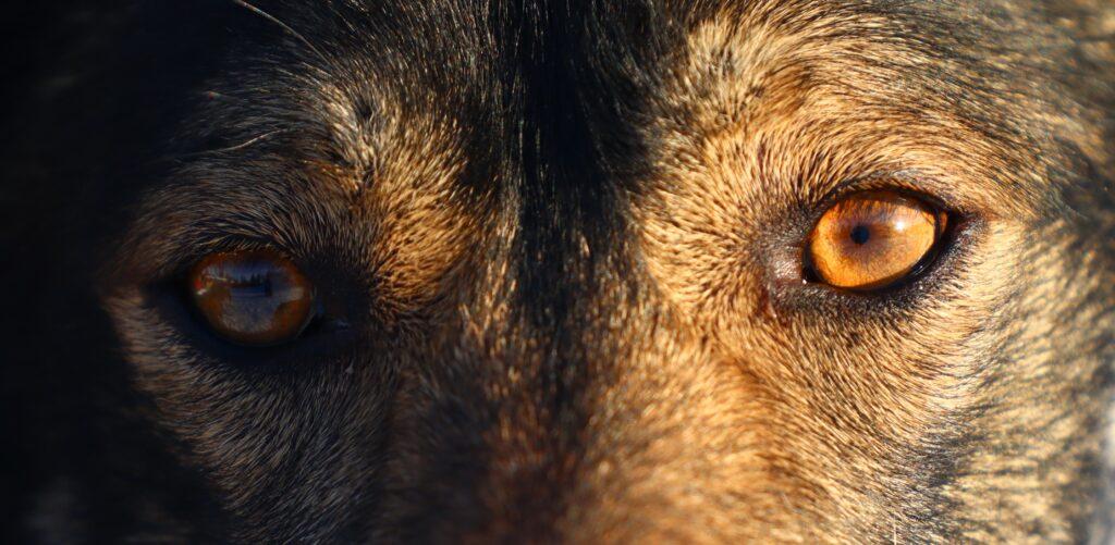 Pigment image: brown eyes