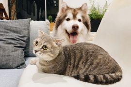 tienda online especializada de mascotas