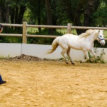 Equicoaching Professionnel