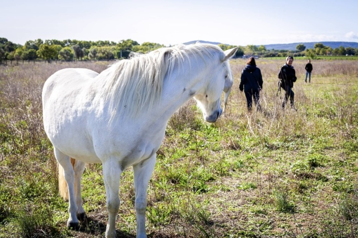 Chevaux Biar dit Merci - Initiative solidaire