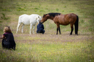 Equicoaching Initiative Equi-Experience Solidaire