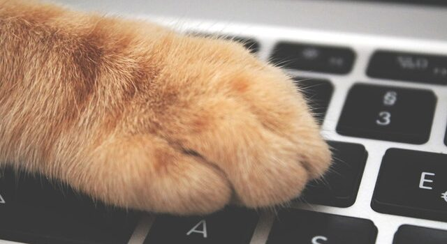 cat paw on pension laptop