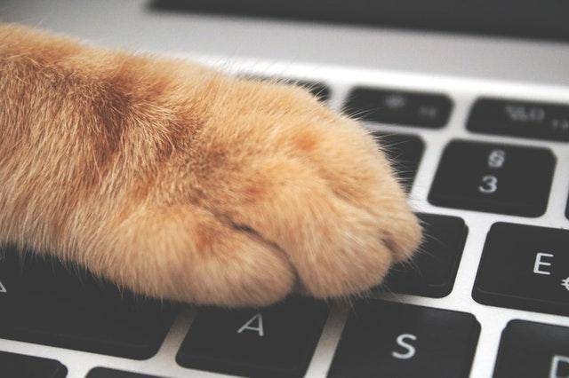 cat paw on pension laptop