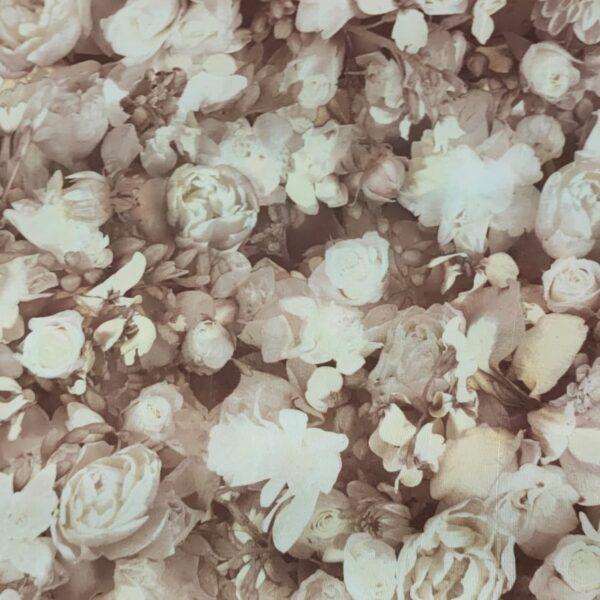 Polyester Transfer Print Wight Rose