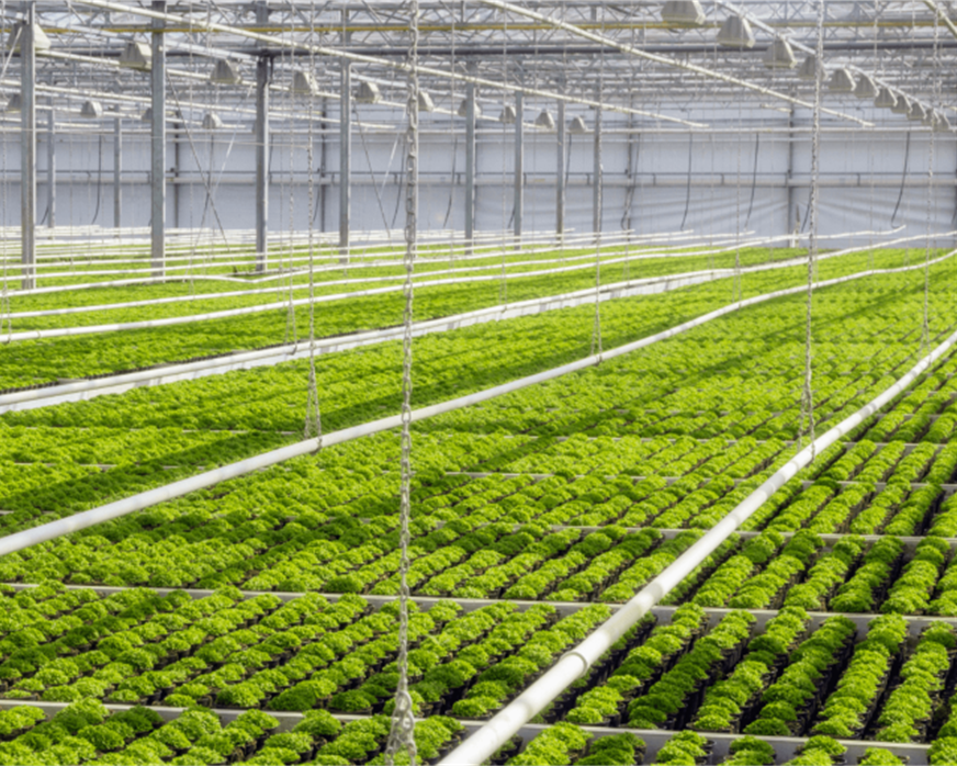 Low Carbon Farming Green House