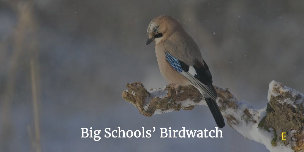 Big Schools' Bird Watch