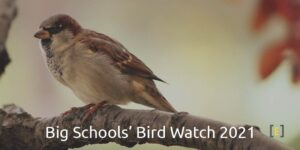 Big Schools' Bird Watch 2021