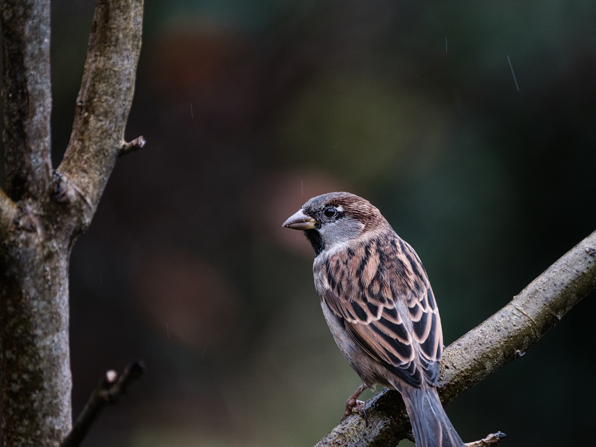 Beautiful bird perched on a branch