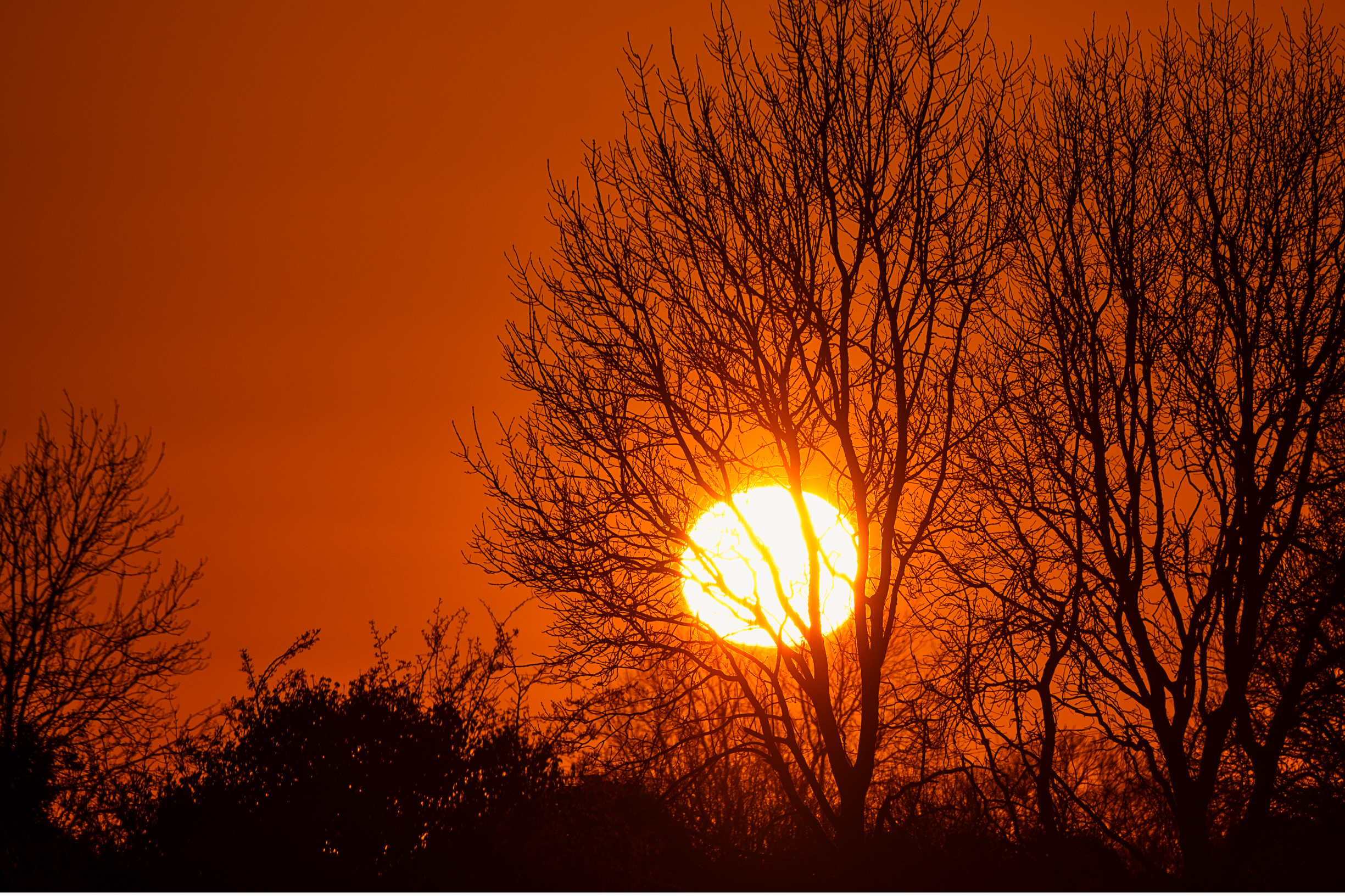 Silhouetted tree at dawn