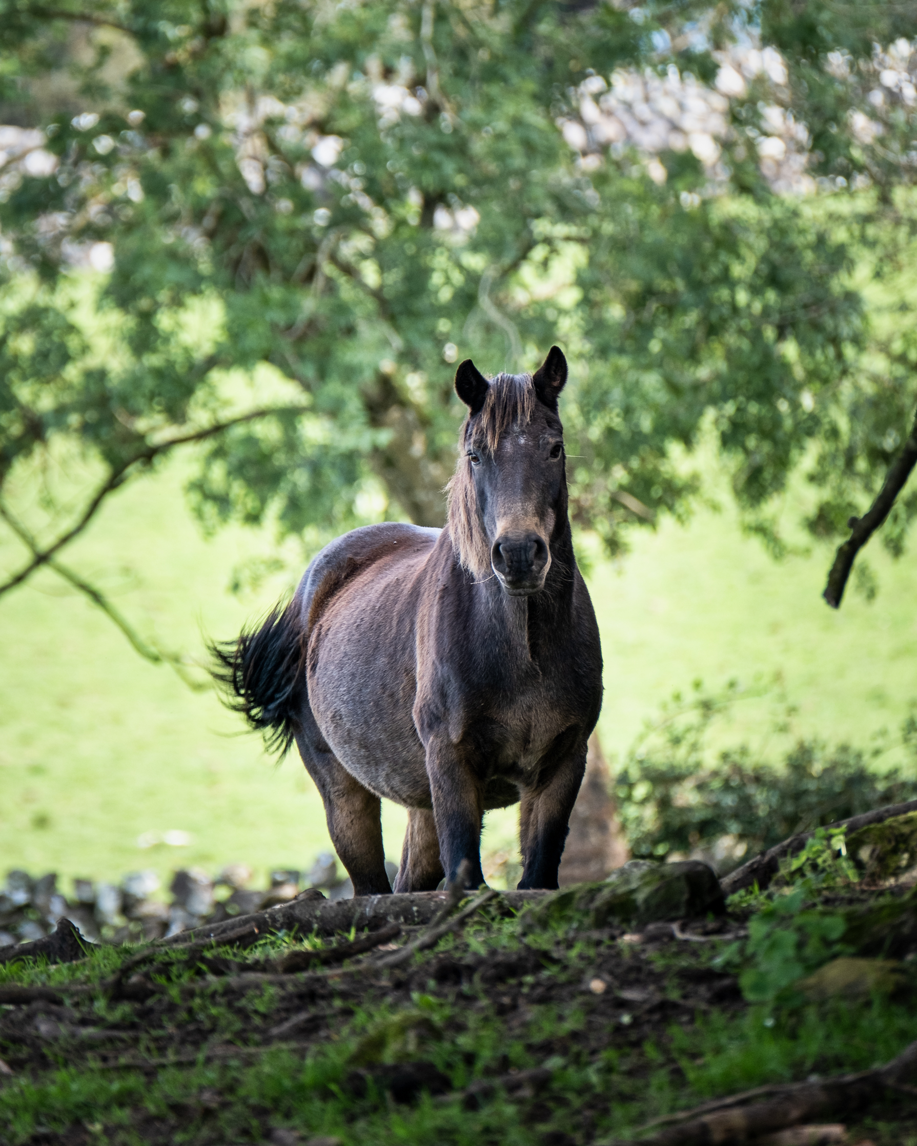 a noble horse standing in trees