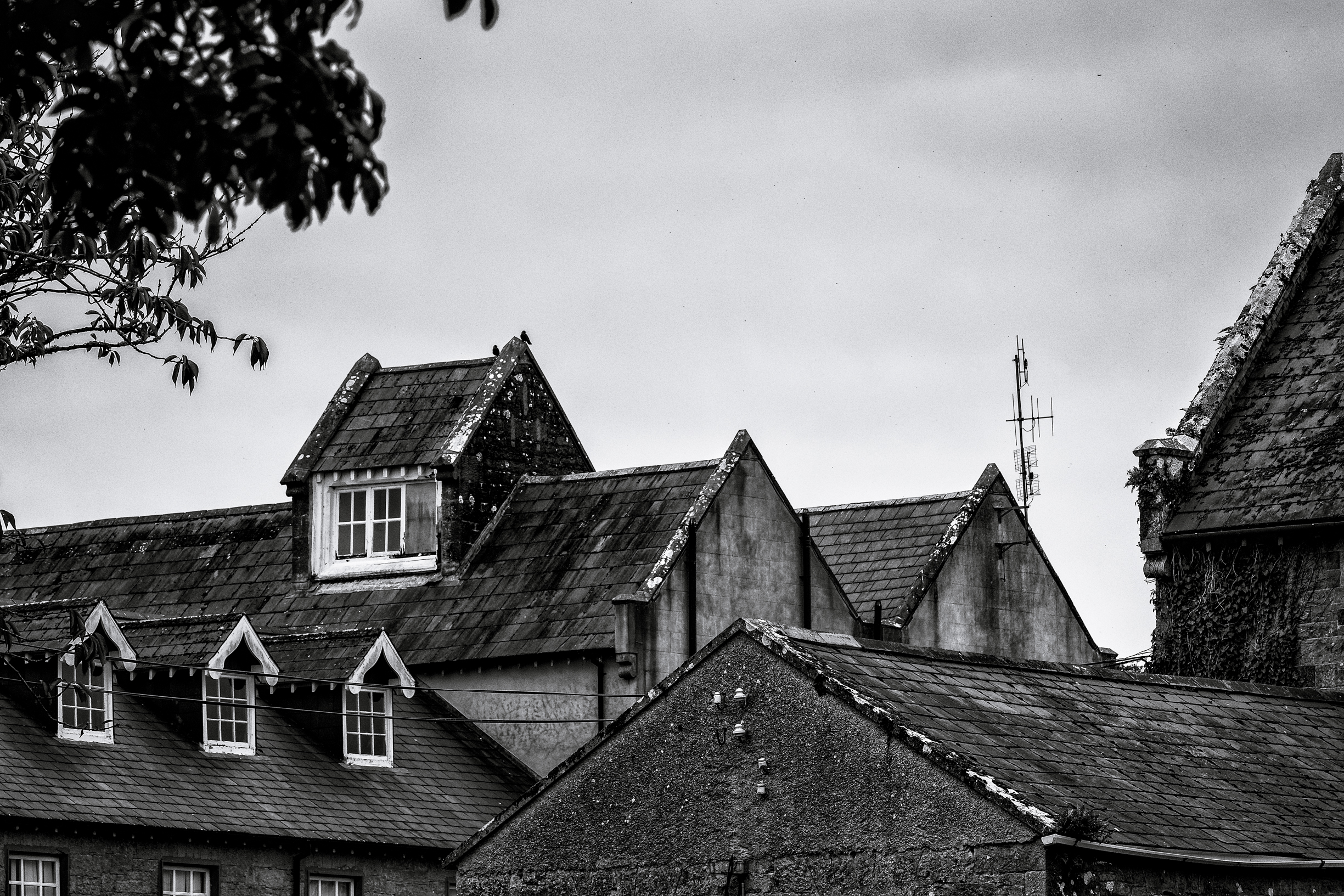Black and white photo of county home Loughrea