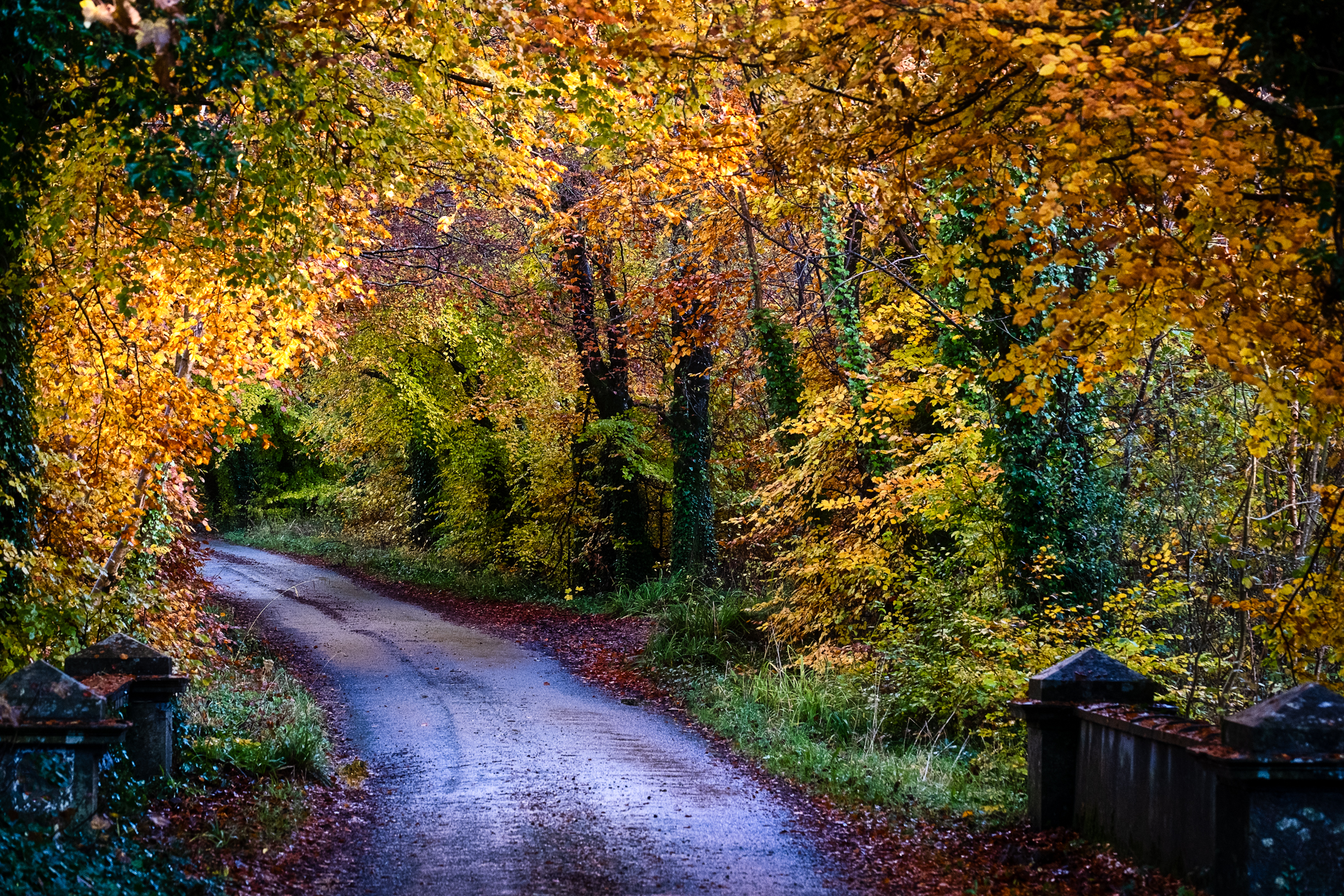 autumn coloured avenue dunsandle