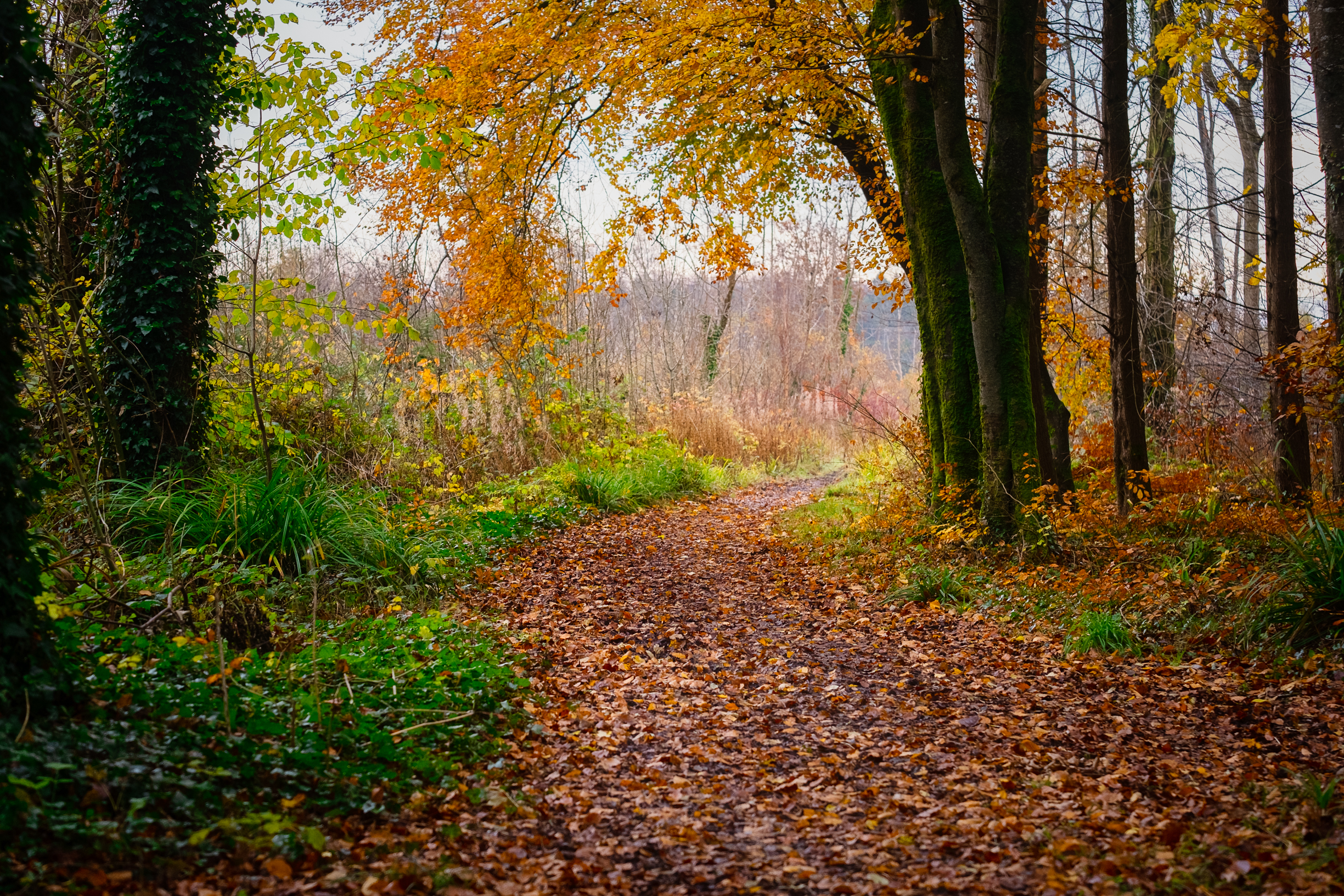 a forest trail