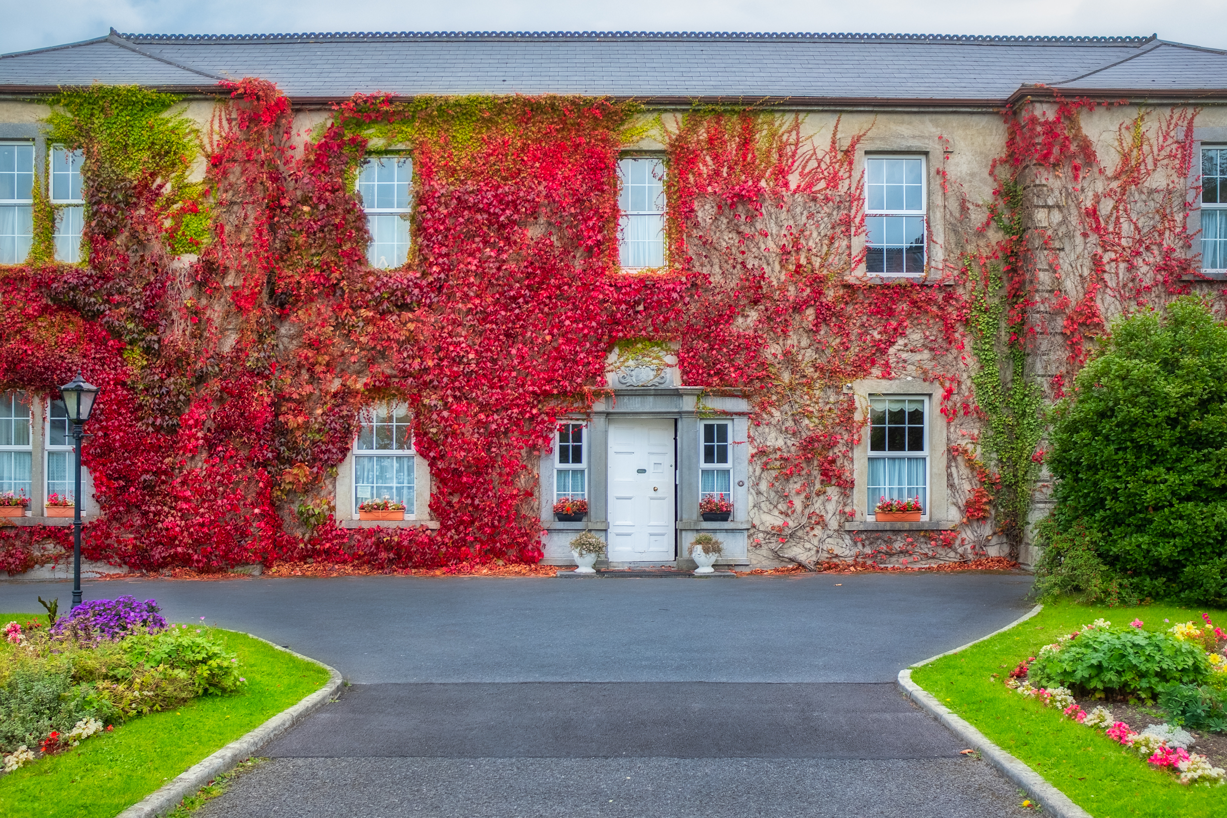 Boston Ivy on building