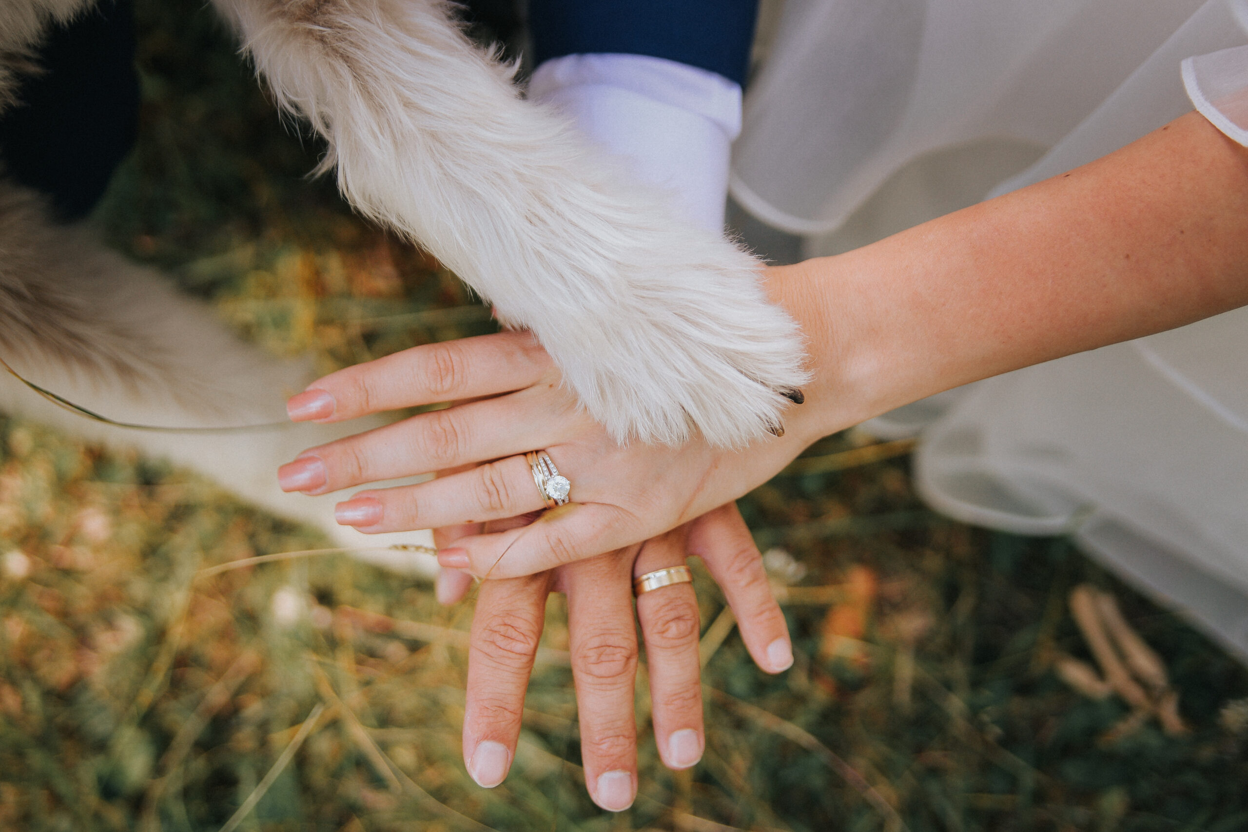 Pets and Weddings