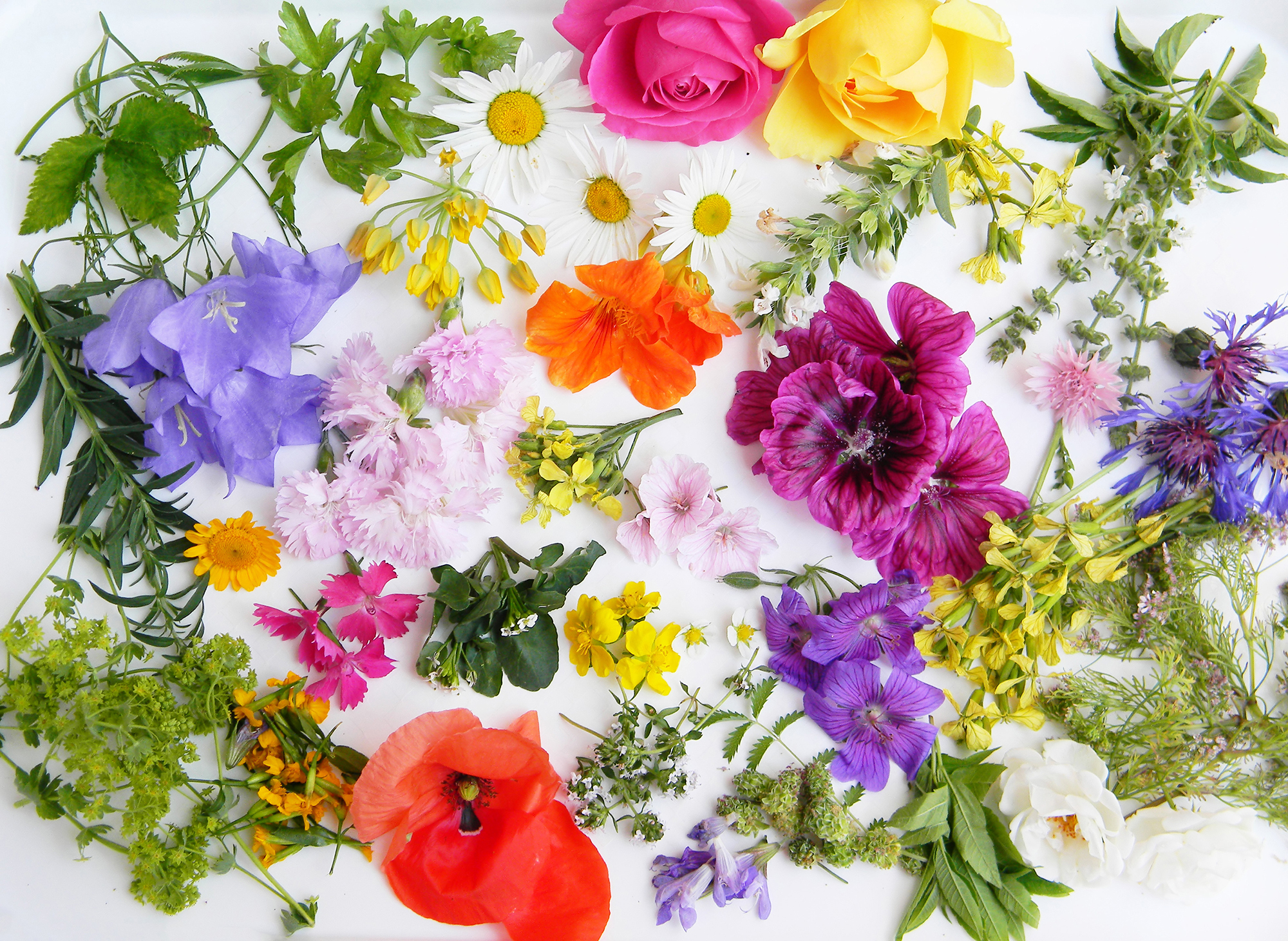 A list of edible flowers
