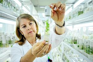 L'editing genetico può salvare l'agricoltura italiana da cambiamento climatico