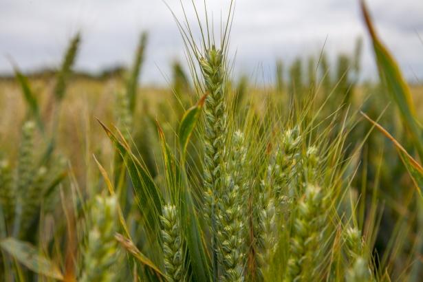 Biotecnologie: entro fine mese lo studio UE per rivedere il divieto del 2018