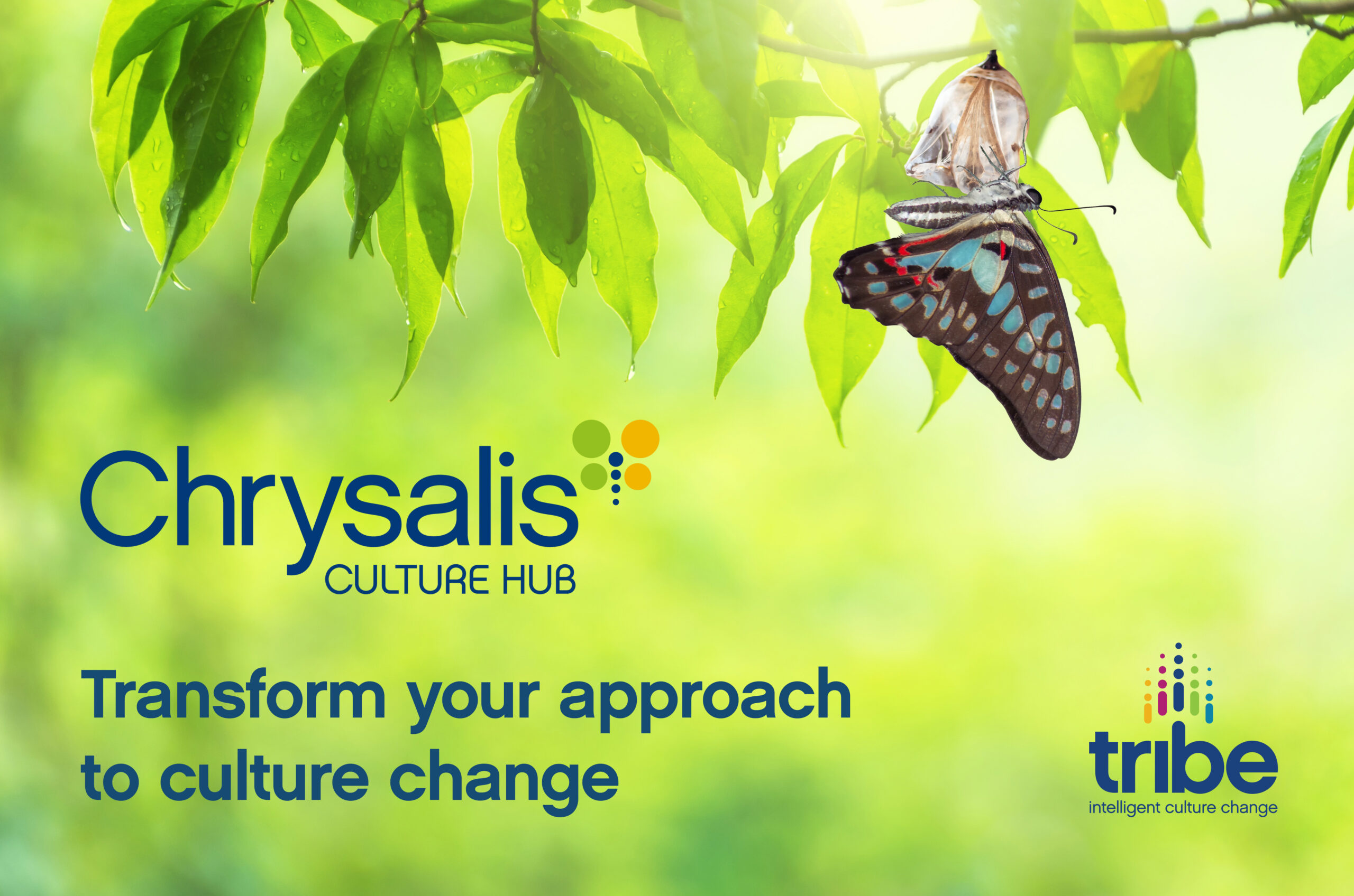 Transform your approach to culture change with the new Chrysalis Culture Hub