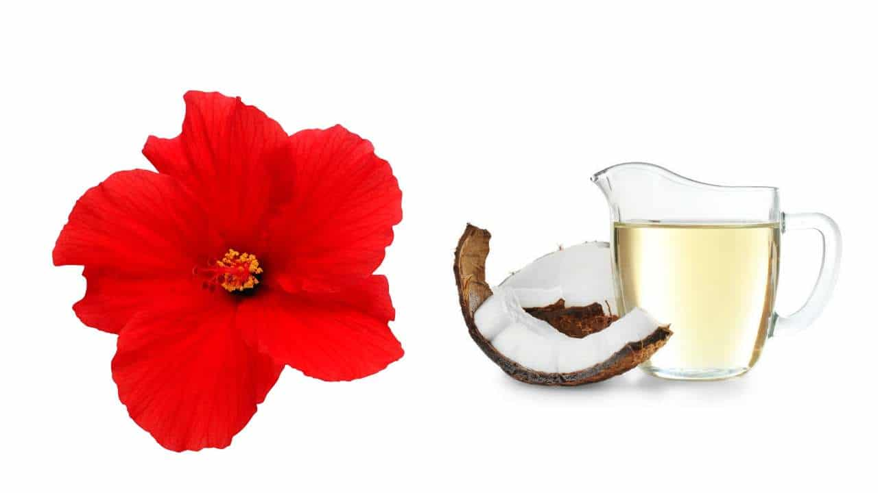Hibiscus and Virgin Coconut oil Hair Mask