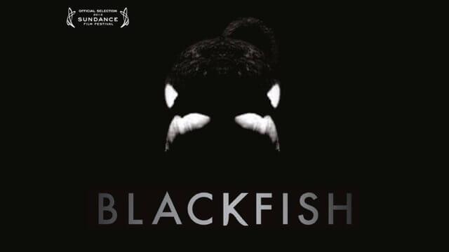 Trailer | Blackfish