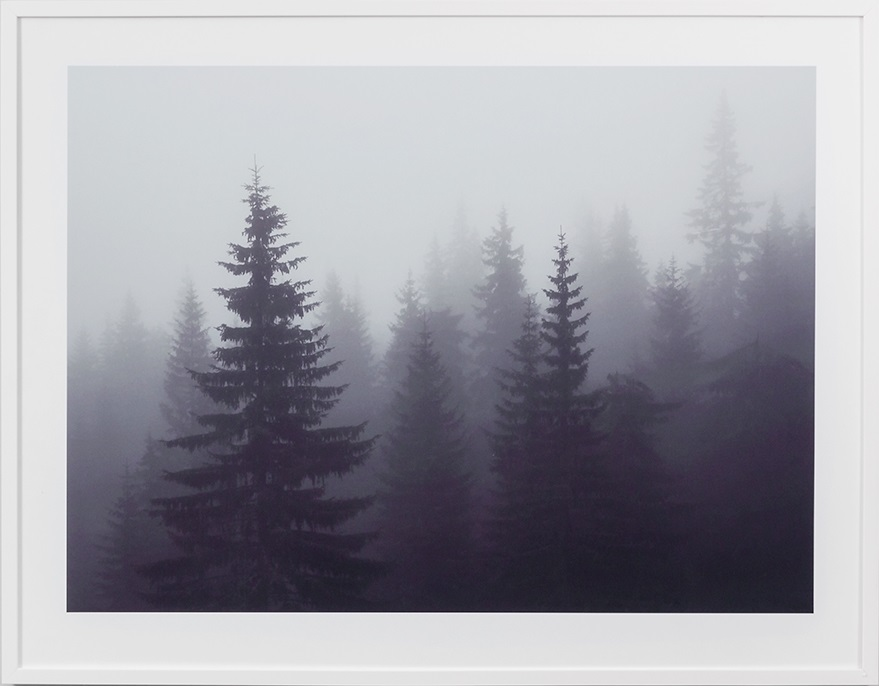 MISTED FOREST_WEB