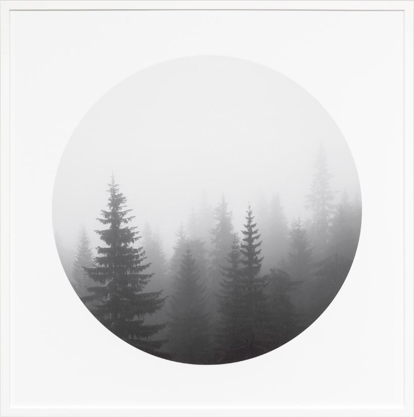 CIRCULAR_FOREST_WEB