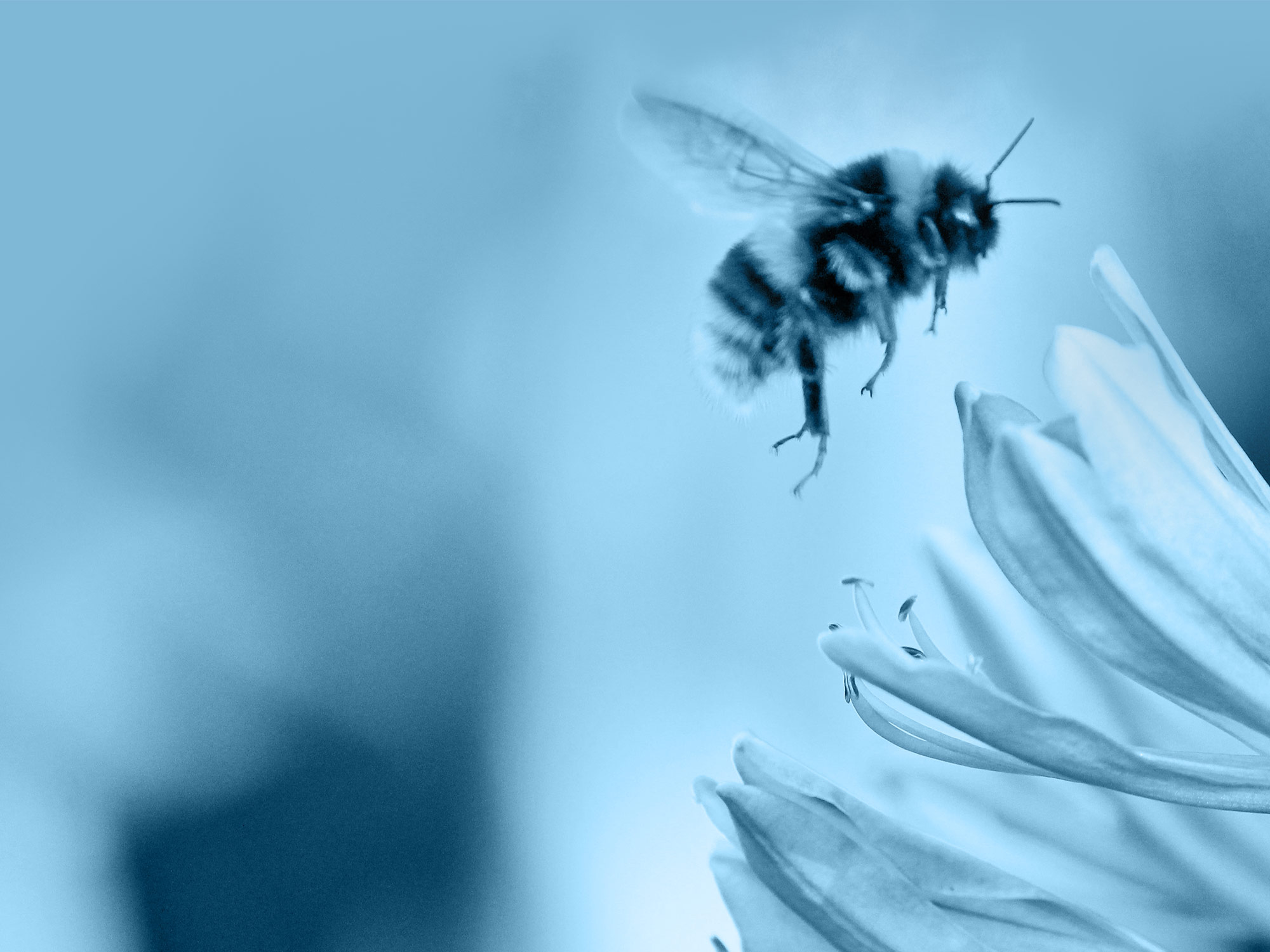 Image of a bee at work. Nobody works harder as a finance lender than Charterbank