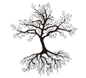 ağaç kökünden yıkılır