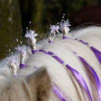 Ponies for weddings