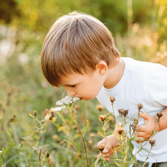 taller para niños con aromaticas