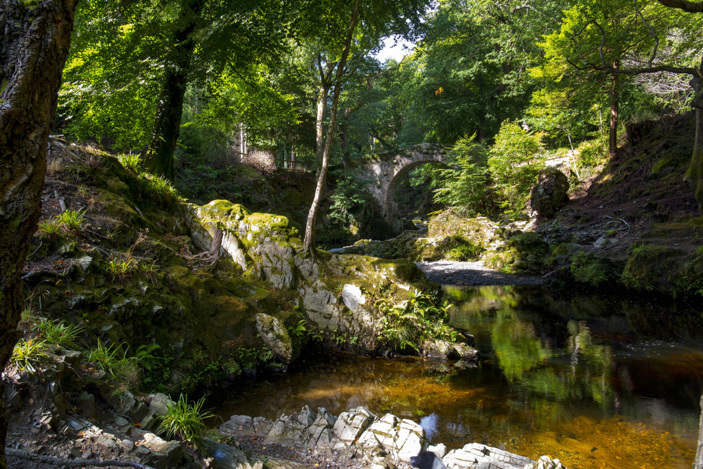 Tollymore Forest in Dublin Murders