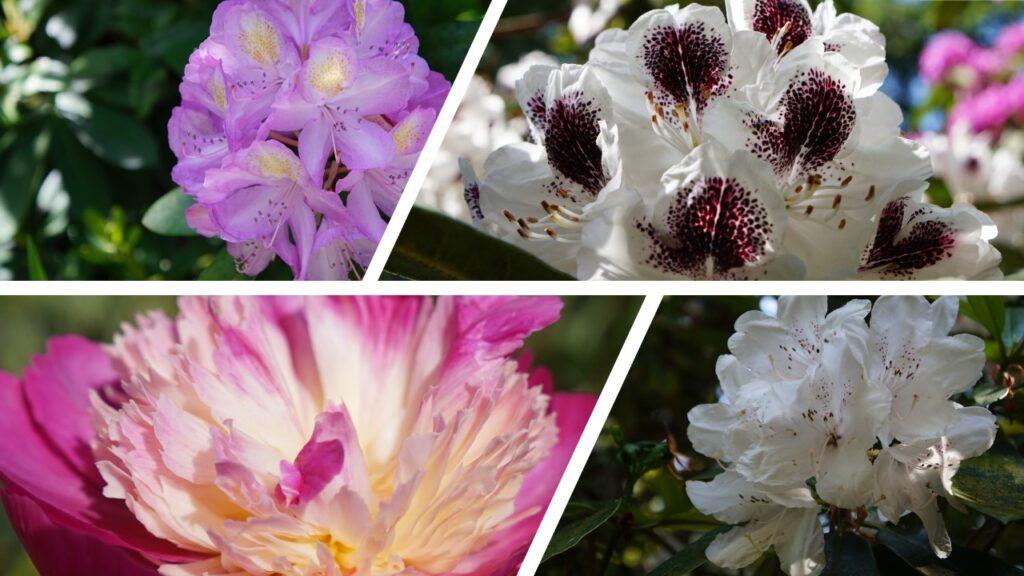 flowers at altamont gardens