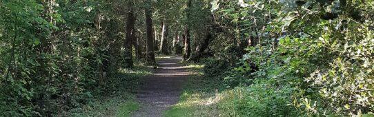 Railway Walk Tomnafinnoge Woods