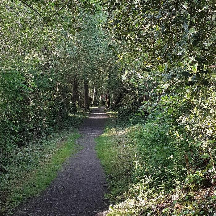 Tomnafinnoge Woods an oak treat in Wicklow