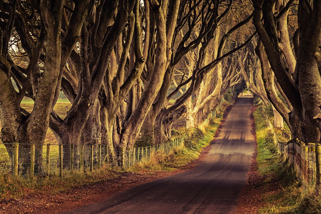 The Dark Hedges, Game of Thrones