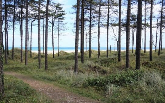 Raven Nature Reserve – trees, trails, and time by the sea