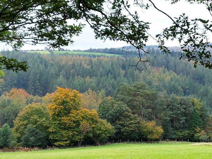 clara vale nature reserve a mindful walker deirdre o'flynn