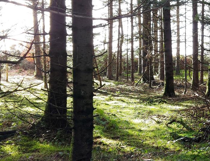 grounded, image of sunlight, trees, mindful walking
