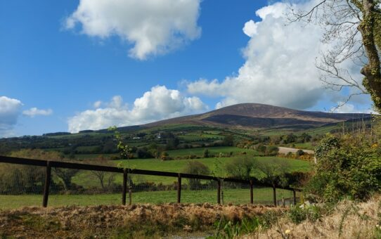 Kiltealy Walking Trails – a delight of birdsong, butterflies, and bygone days