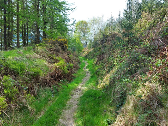 Uphill on Cullentra trail, Kiltealy, wexford