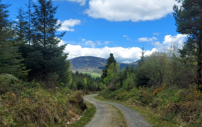 Mount Leinster view from Coillte Forest path, Kiltealy Walking Trail