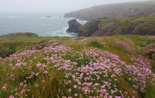 dunmore east cliff walk