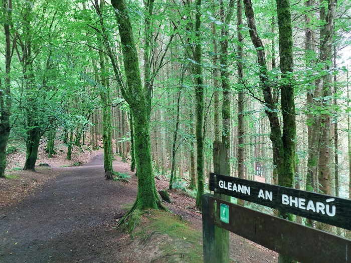Glenbarrow Eco Walk