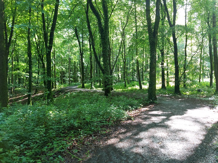 forest bathing, slieve blooms