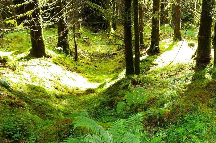 forest bathing, mindful walking, deirdre o'flynn