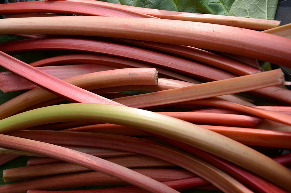 rhubarb Wakefield