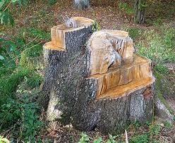 Chopped Stump