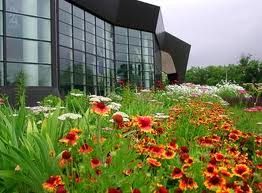 Flowers Against Glass Building